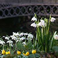 Snowdrop collection highlights tour