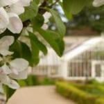 cambo gardens fife