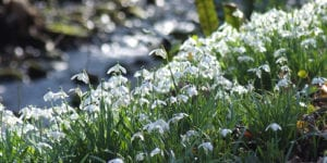 Life after snowdrops with lady catherine erskine