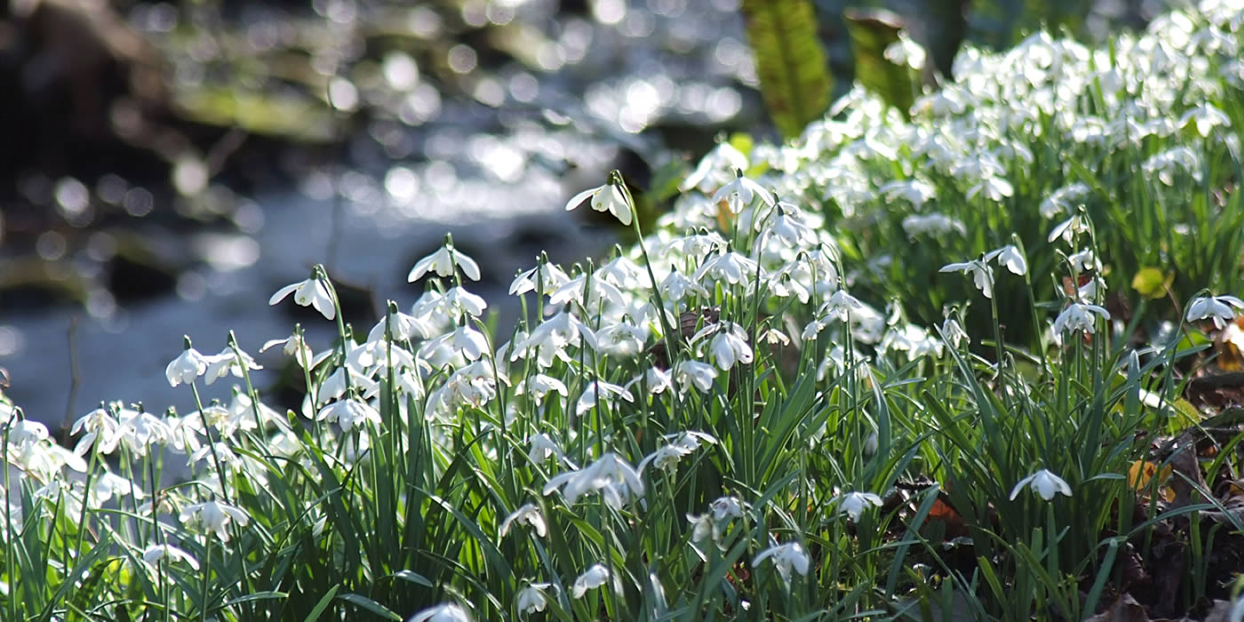 Order Bulbs in the Green - visit our Online shop on this website