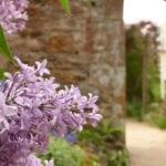 cambo walled garden