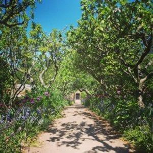 Recording Ancient trees
