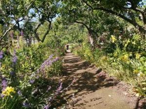 Spring flower festival - walled garden walk