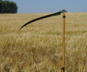 Learn to use an Austrian (Continental) scythe